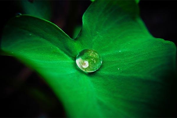4 écogestes pour réaliser des économies d'énergie